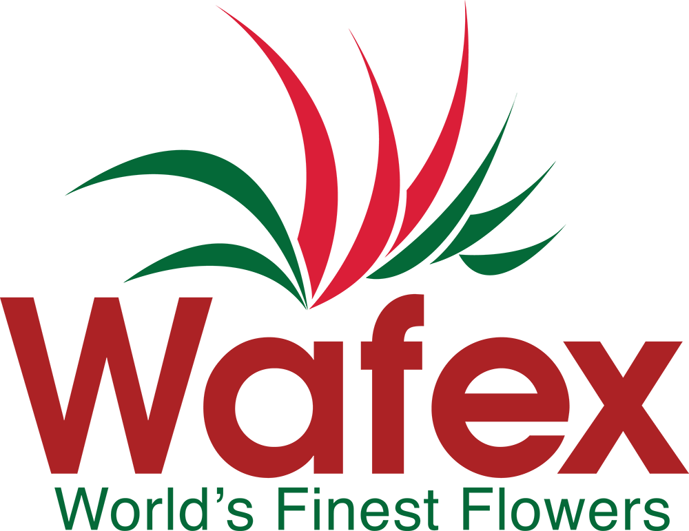 WAFEX