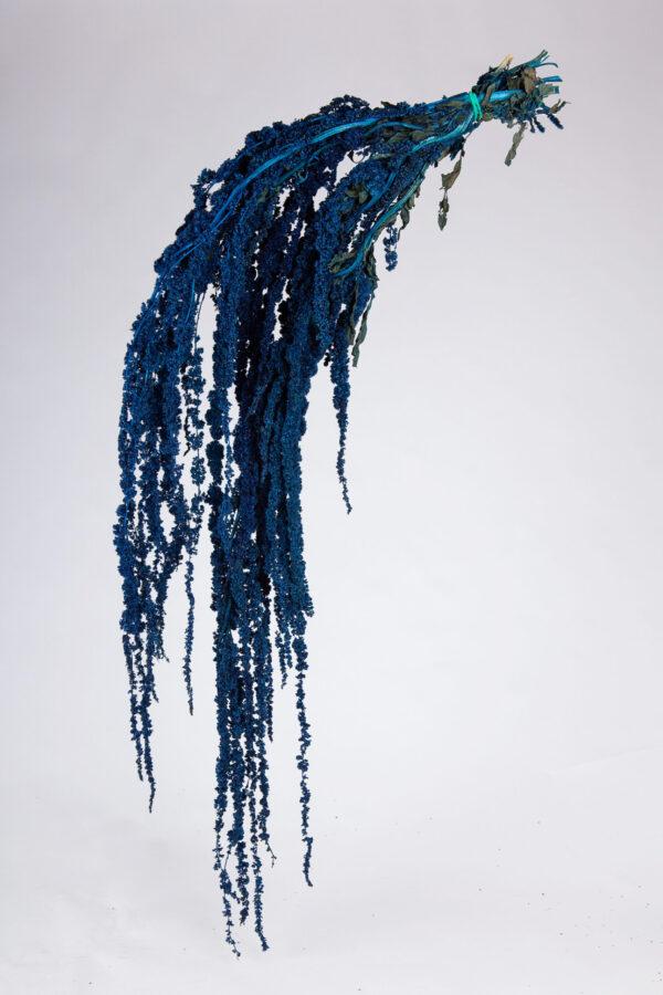 Amaranthus Hanging Dry Dark Blue