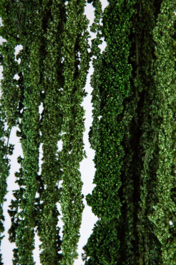 Amaranthus Hanging Dry Green