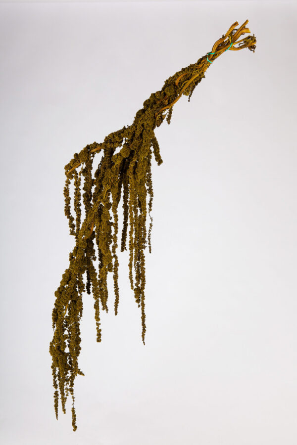 Amaranthus Hanging Dry Moss Green