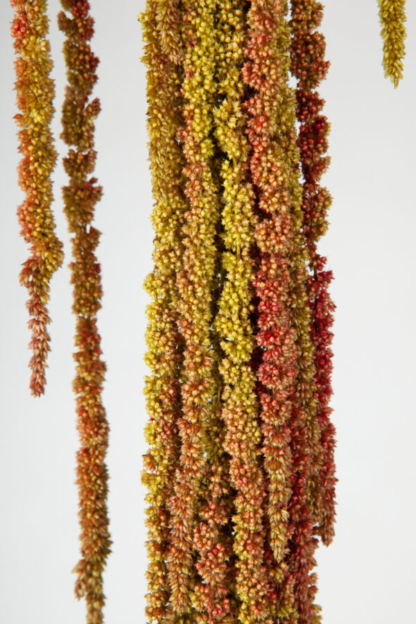 Amaranthus Hanging Dry Orange & Green