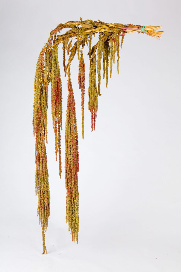 Amaranthus Hanging Dry Orange & Gree