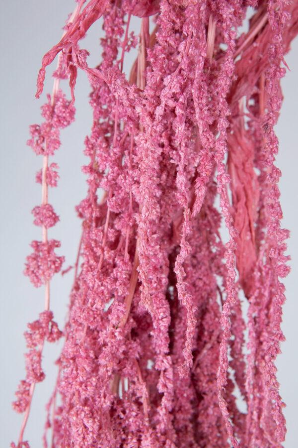 Amaranthus Hanging Dry Pink