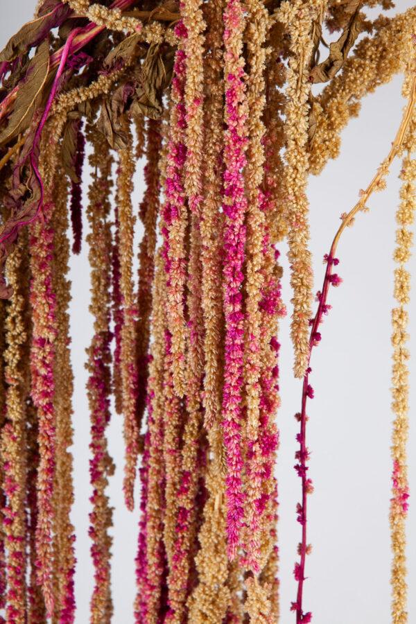 Amaranthus Hanging Dry Pink & Green