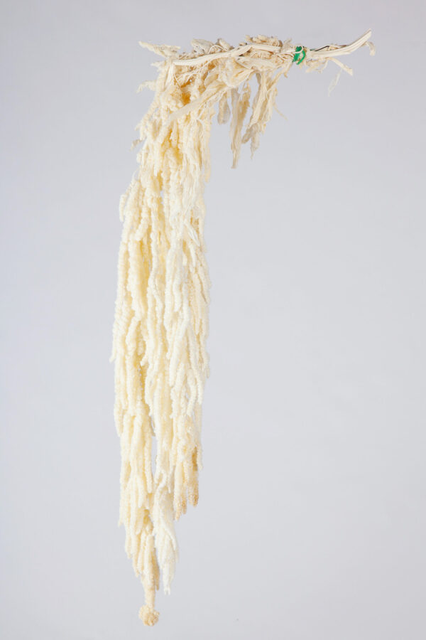 Amaranthus Hanging Preserved Bleached