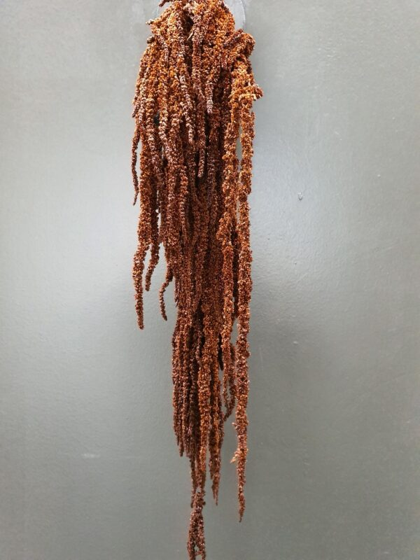 Amaranthus Hanging Preserved Brown
