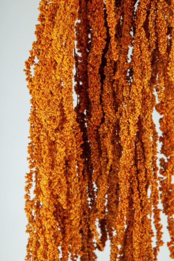 Amaranthus Hanging Preserved Dark Orange