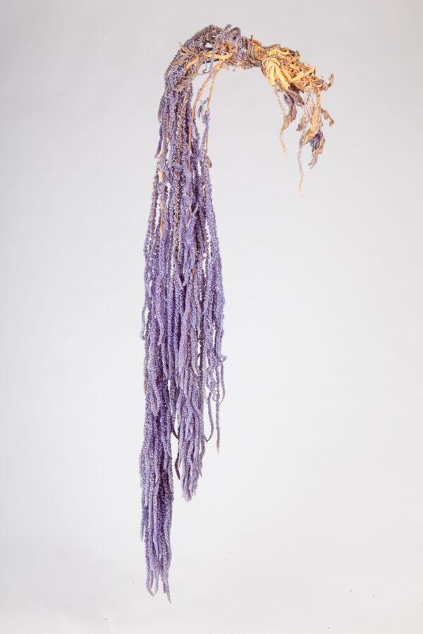 Amaranthus Hanging Preserved Light Violet
