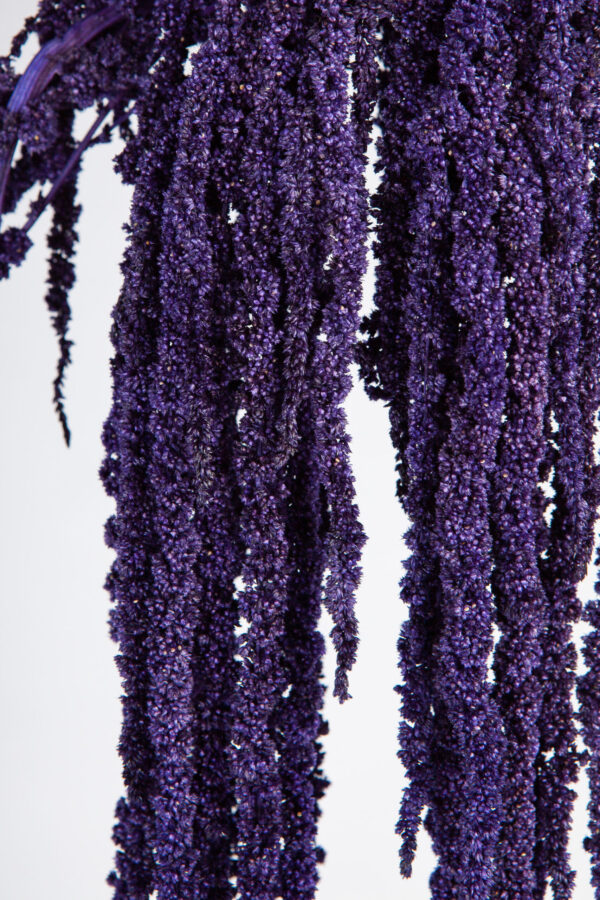 Amaranthus Hanging Preserved Purple