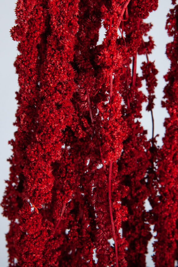 Amaranthus Hanging Preserved Red