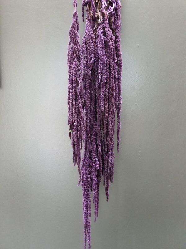Amaranthus Hanging Preserved Violet