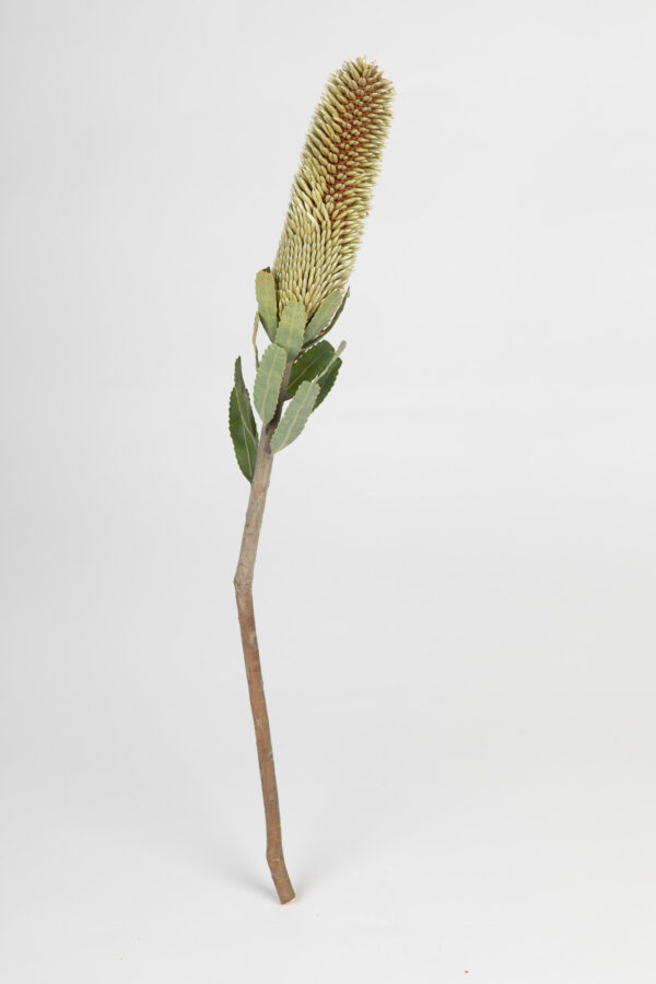 Banksia Sceptrum Candle