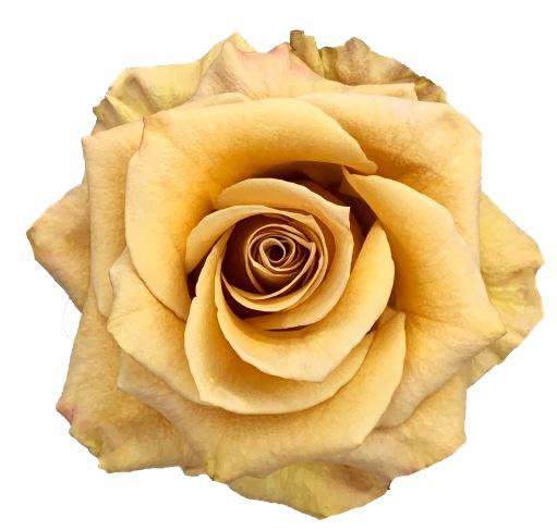 Rose Combo