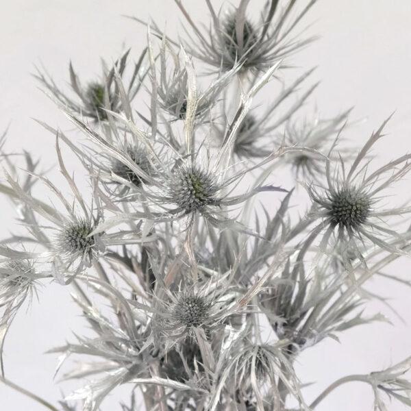Eryngium Blue Lagoon Tinted Silver