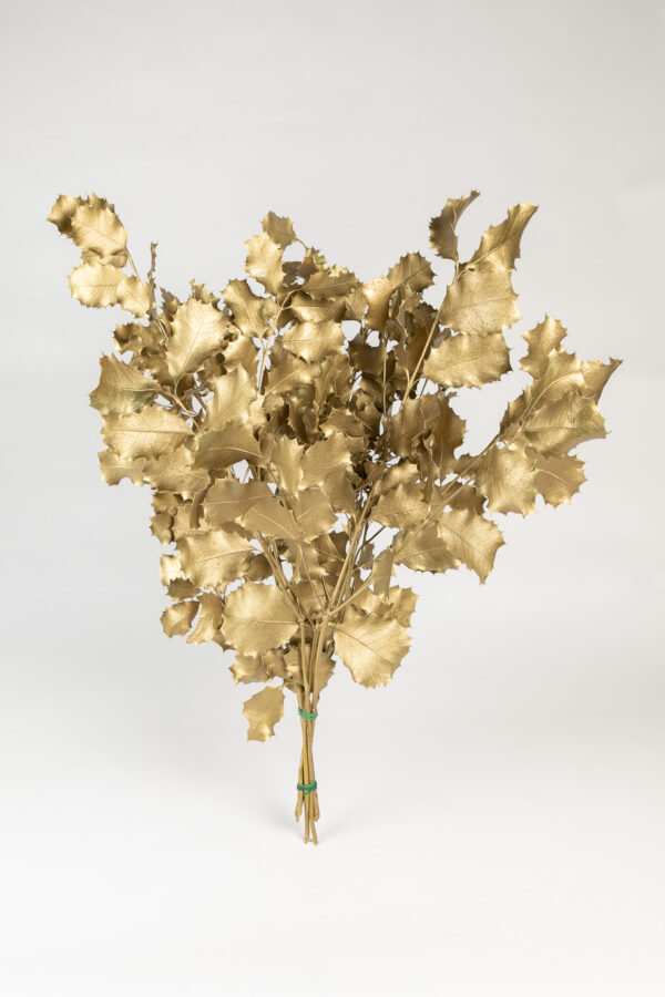 Holly Oak Tinted Gold