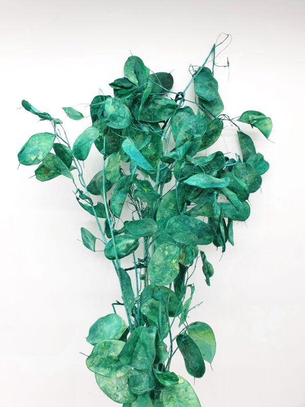 Lunaria Preserved Dark Green