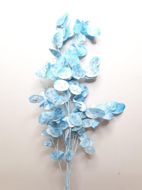 Lunaria Preserved Light Blue