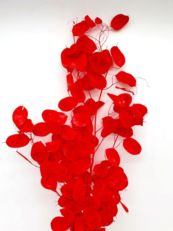 Lunaria Preserved Red