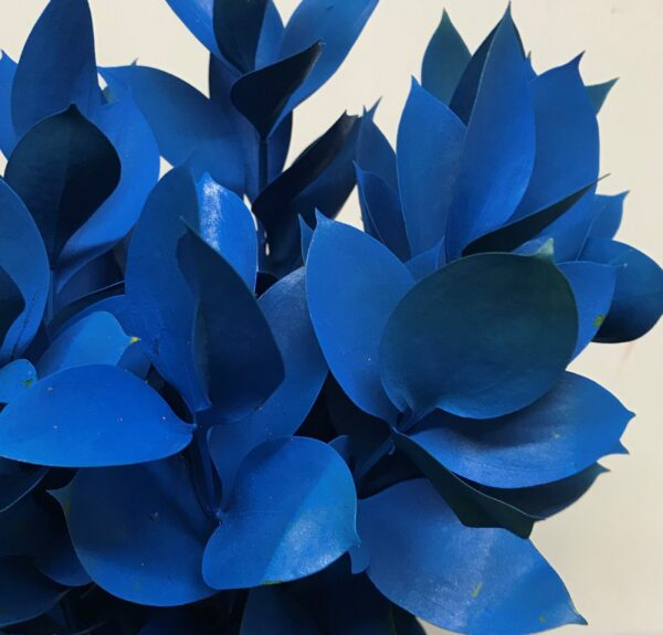 Ruscus Israeli Painted Blue