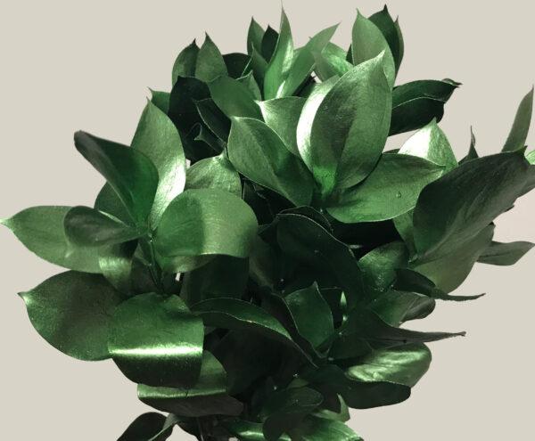 Ruscus Israeli Painted Green