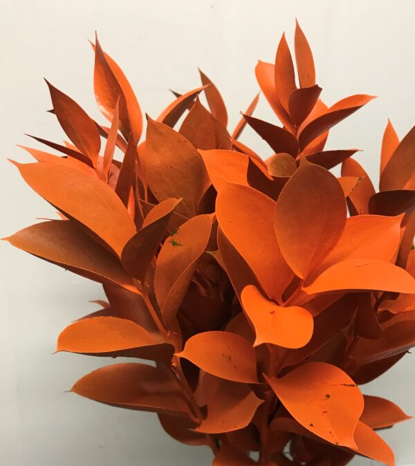Ruscus Israeli Painted Orange