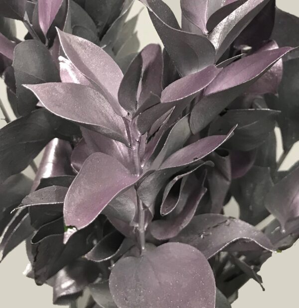 Ruscus Israeli Painted Silver