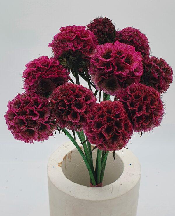 Scabiosa Stellata Preserved Dark Pink (EUR)