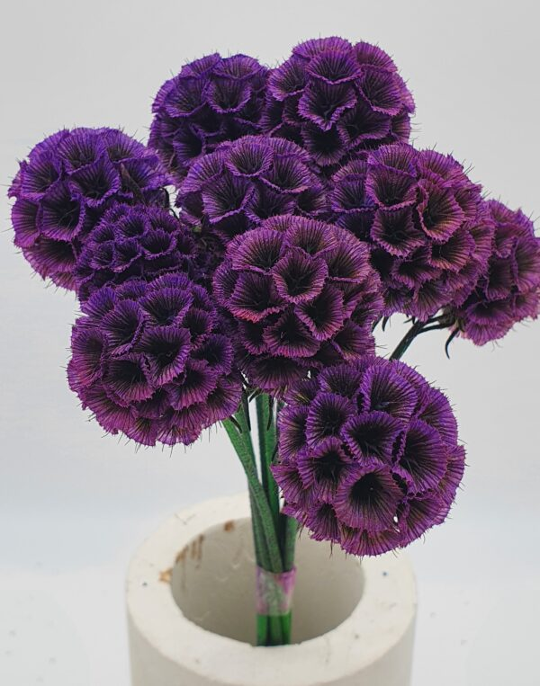 Scabiosa Stellata Preserved Purple (EUR)