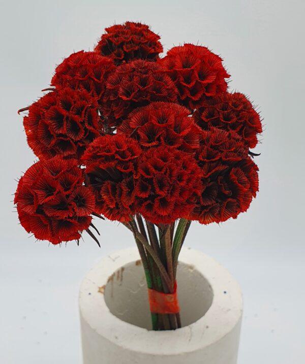 Scabiosa Stellata Preserved Red (EUR)