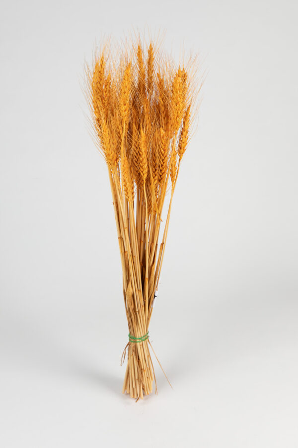 Wheat Dry Tinted Apricot