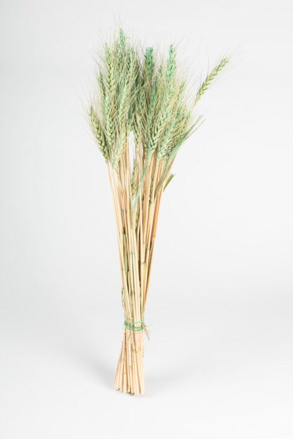 Wheat Tinted Aqua