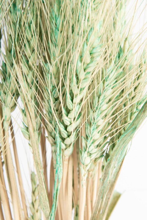 Wheat Dry Tinted Aqua