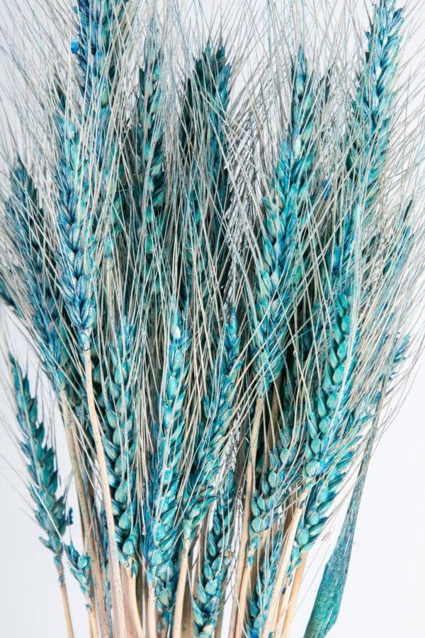 Wheat Dry Blue