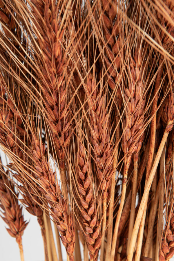 Wheat Dry Tinted Brown