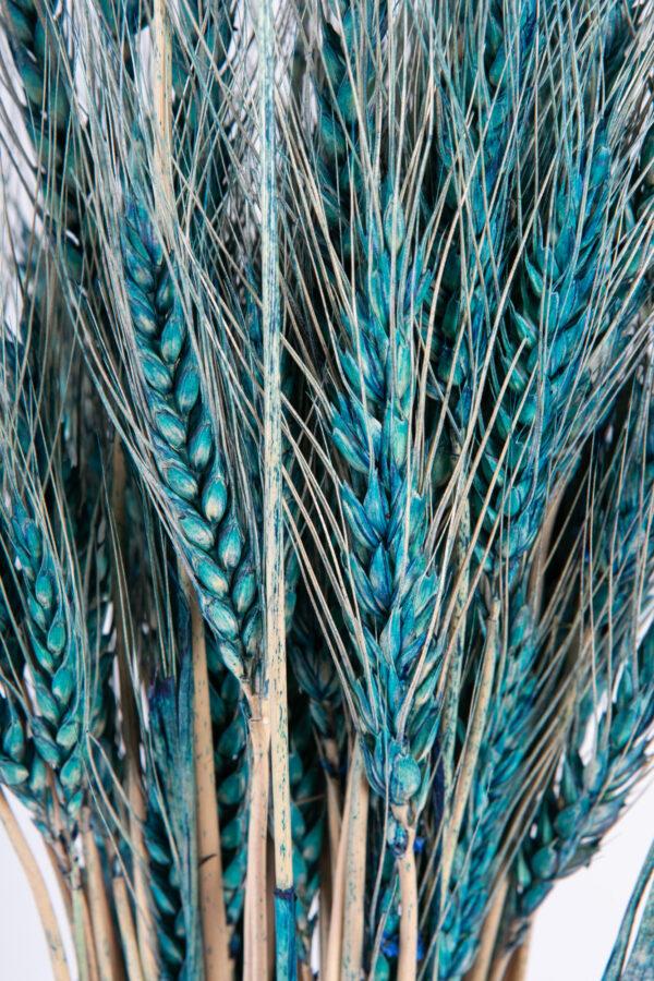 Wheat Dry Tinted Dark Blue