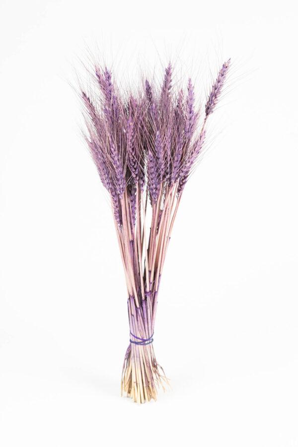 Wheat Dry Tinted Dark Purple