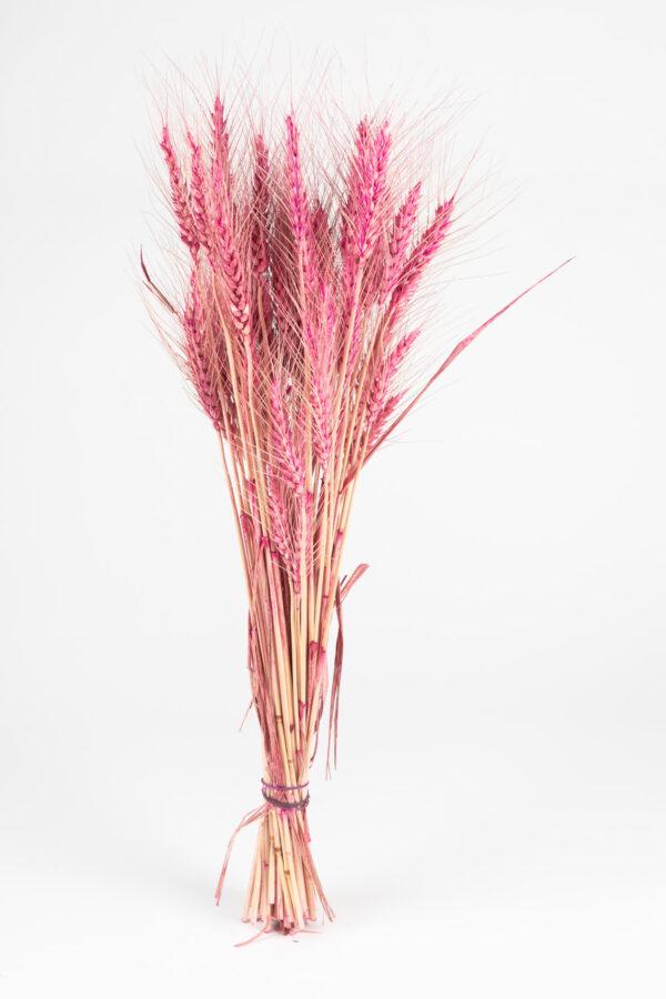 Wheat Dry Tinted Fuchsia