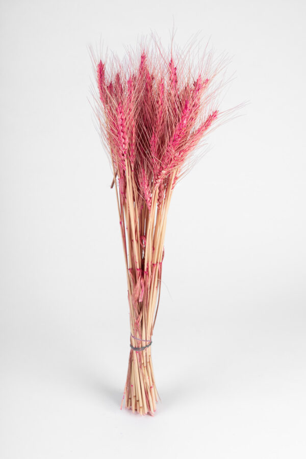Wheat Dry Tinted Hot Pink