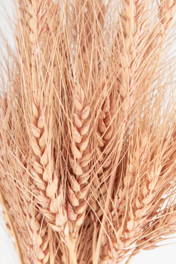 Wheat Dry Tinted Light Pink