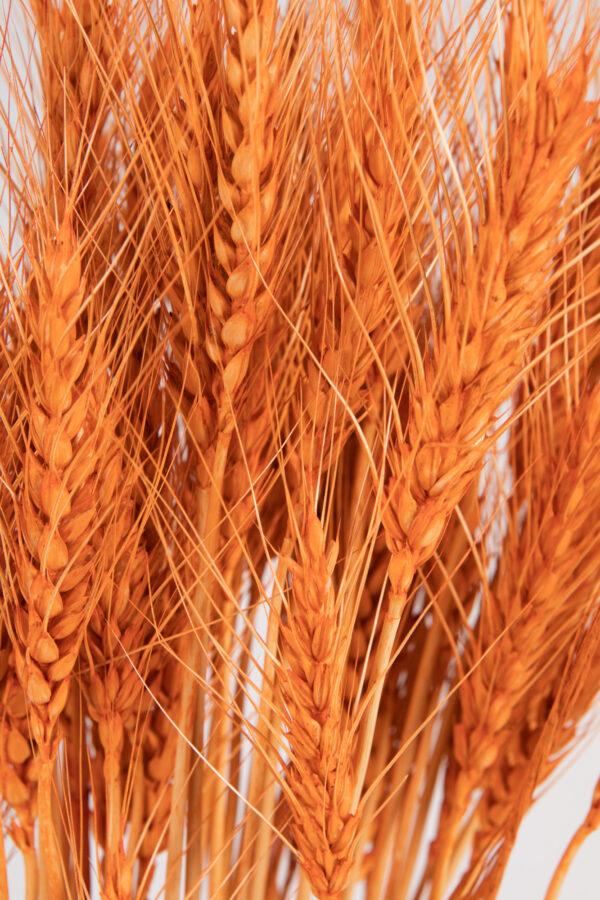 Wheat Dry Tinted Orange