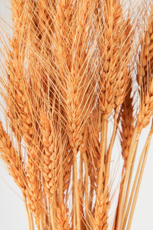 Wheat Dry Tinted Peach