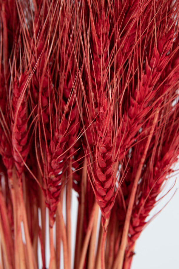 Wheat Dry Tinted Red