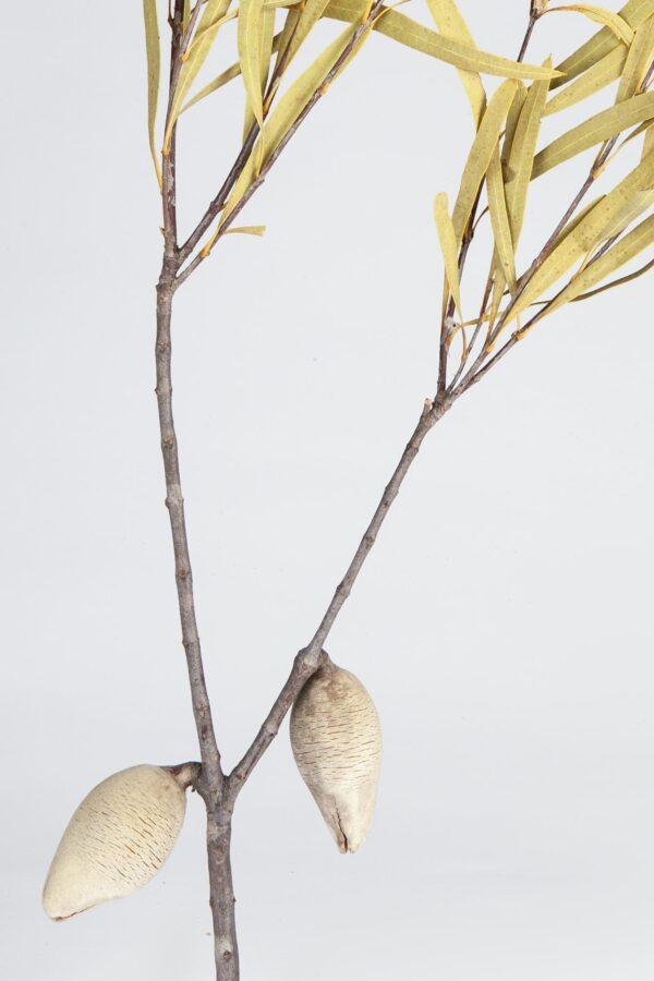 Woody Pearl Leafy 2 Nut