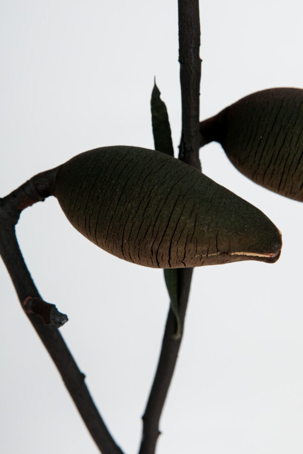 Woody Pear Dry Tinted Black