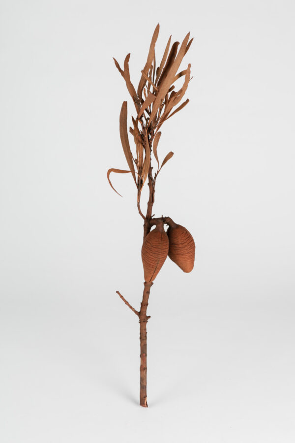Woody Pear Leafy Dry Tinted Brown